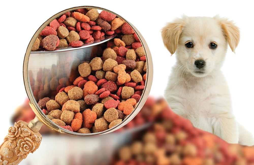 Resultado de imagem para Expectativas em alimentos para animais de estimação na América Latina